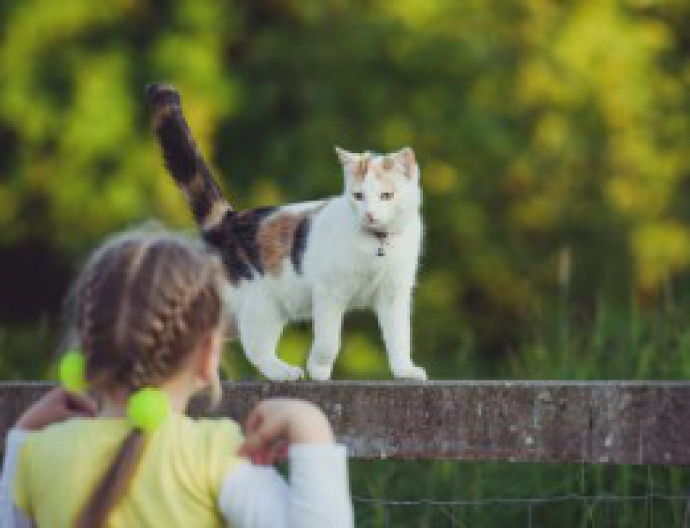 Summer Safety Pet Tips