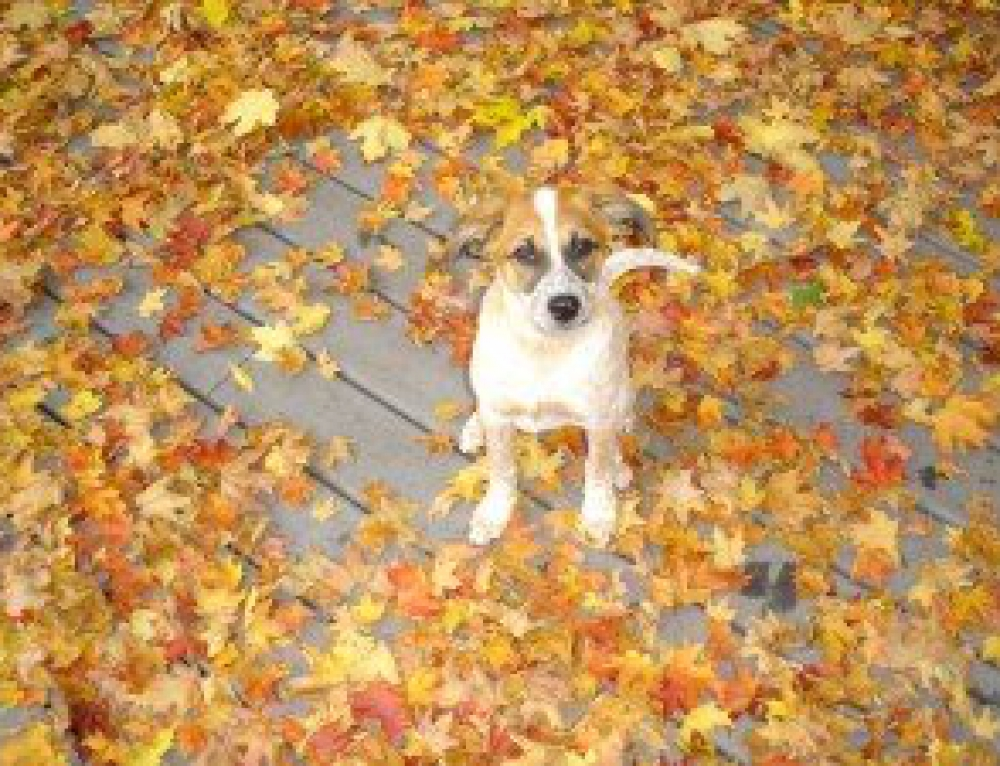 Preparing Pets for Fall
